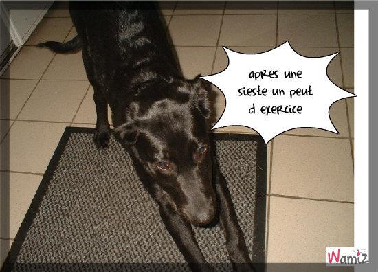 mon chien, lolcats réalisé sur Wamiz