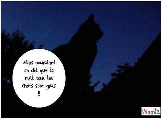 GRIZOU chat gris la nuit., lolcats réalisé sur Wamiz