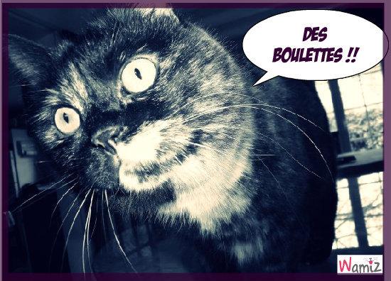 Mon chat belette qui aime les boulettes , lolcats réalisé sur Wamiz