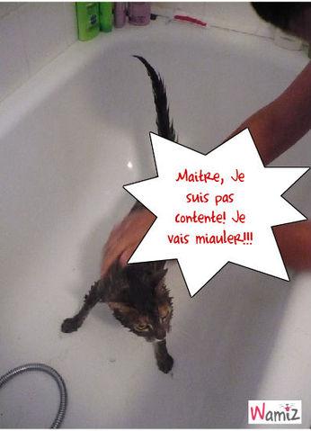 Je n'aime pas l'eau!, lolcats réalisé sur Wamiz
