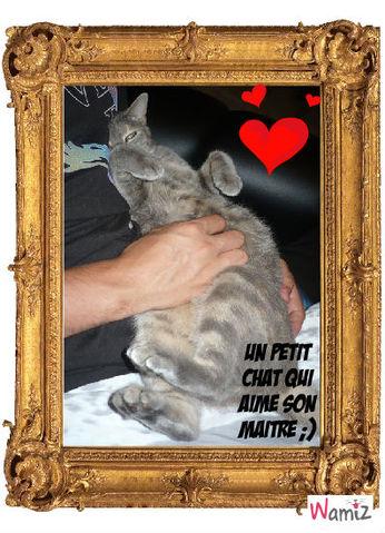 Un chat qui aime son maitre, lolcats réalisé sur Wamiz