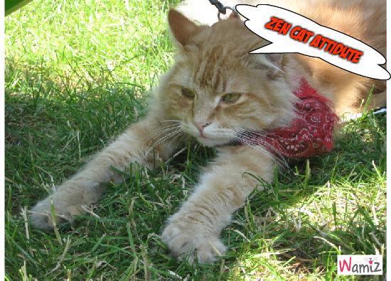 zen cat, lolcats réalisé sur Wamiz