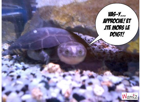 Miss turtle, lolcats réalisé sur Wamiz