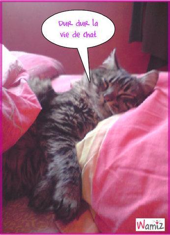 Dur dur la vie de chat, lolcats réalisé sur Wamiz