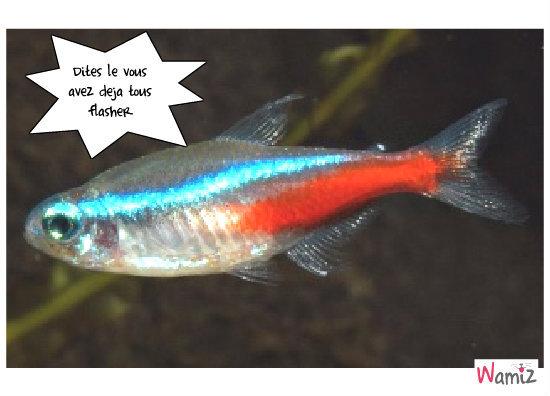 flash le poisson, lolcats réalisé sur Wamiz