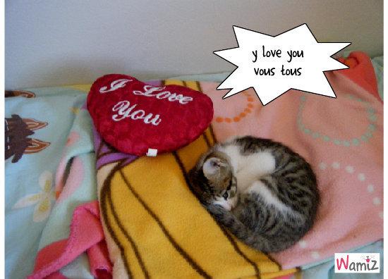 y love youy love you, lolcats réalisé sur Wamiz