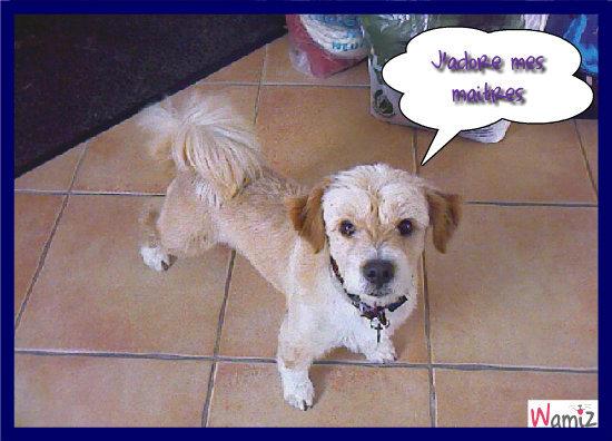Kyubis le plus adorable des chiens, lolcats réalisé sur Wamiz