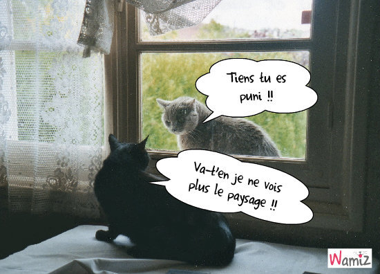 L'exclusivité de ma fenêtre!, lolcats réalisé sur Wamiz