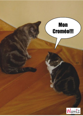 Croquette et Léa, lolcats réalisé sur Wamiz
