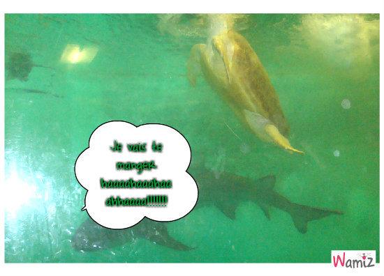 L'aquarium qui fait peur!!!, lolcats réalisé sur Wamiz