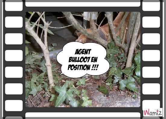 Elroy en camouflage !!, lolcats réalisé sur Wamiz