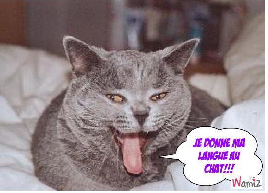 Langue de chat, lolcats réalisé sur Wamiz