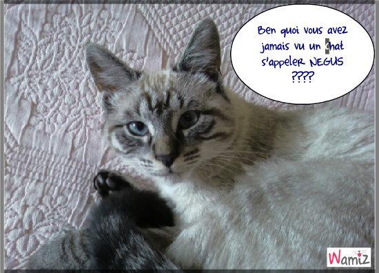 NEGUS chat roi, lolcats réalisé sur Wamiz
