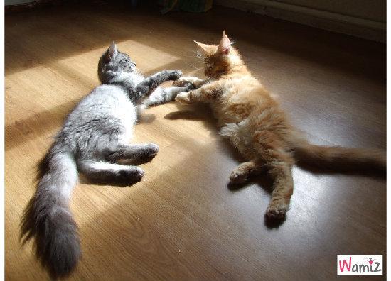 Tu me laisses une petite place au soleil à tes côtés? , lolcats réalisé sur Wamiz