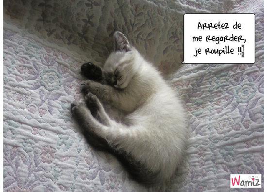 c'est dur d'être un chaton !!!, lolcats réalisé sur Wamiz