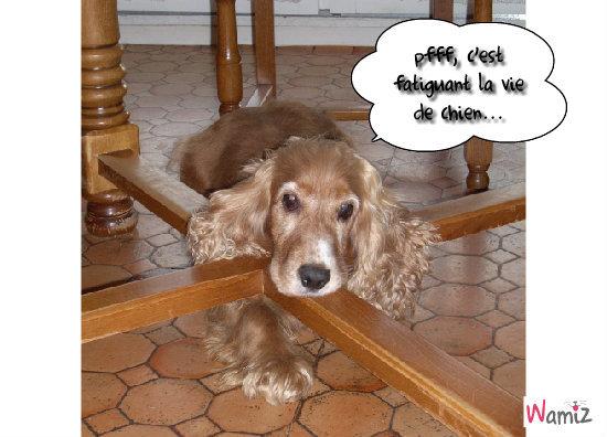 une vie de chien, lolcats réalisé sur Wamiz