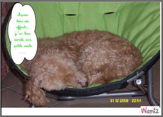 Snoopy en pleine sieste, lolcats réalisé sur Wamiz
