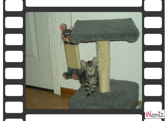 capsule sur son arbre à chat, lolcats réalisé sur Wamiz