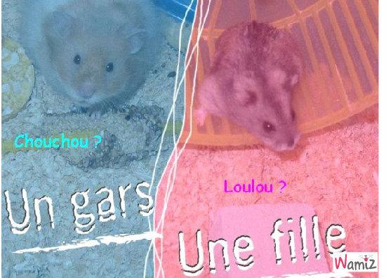 Loulou & Chouchou, lolcats réalisé sur Wamiz