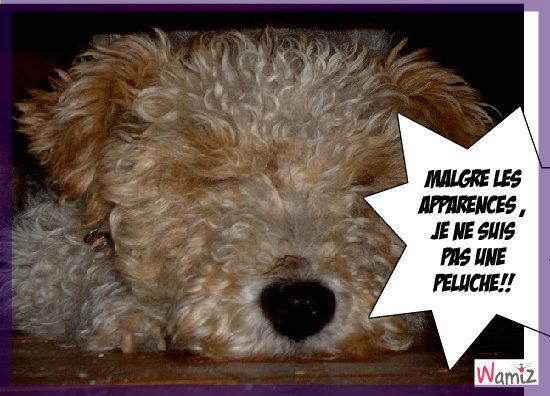 ma chienne,Dipsy, lolcats réalisé sur Wamiz
