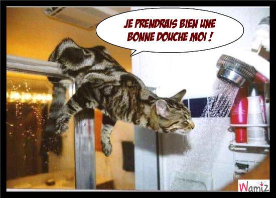 chat ne craint pas l'eau, lolcats réalisé sur Wamiz