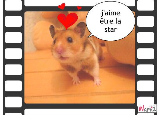 hamster adoré, lolcats réalisé sur Wamiz