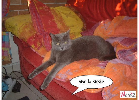 Grisette, la sérieuse, lolcats réalisé sur Wamiz