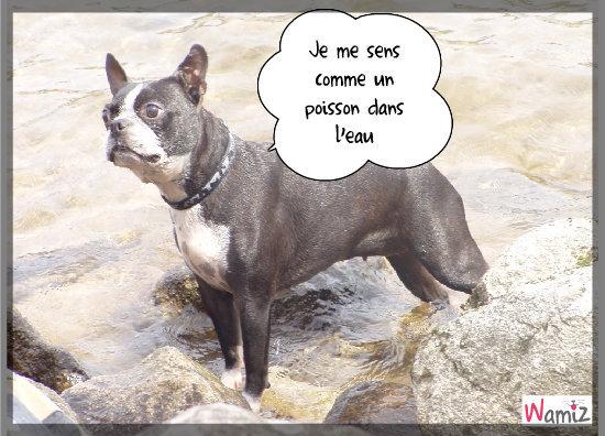 Poisson-chien, lolcats réalisé sur Wamiz
