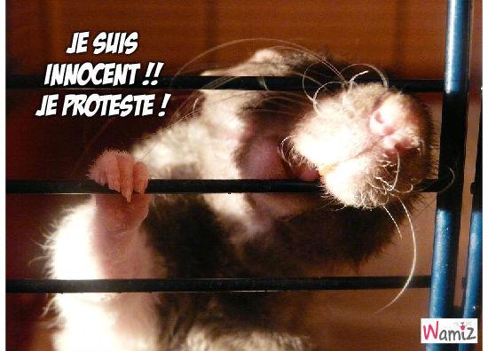 Innocent !, lolcats réalisé sur Wamiz