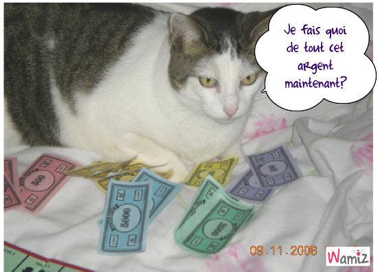 chat richechat riche, lolcats réalisé sur Wamiz