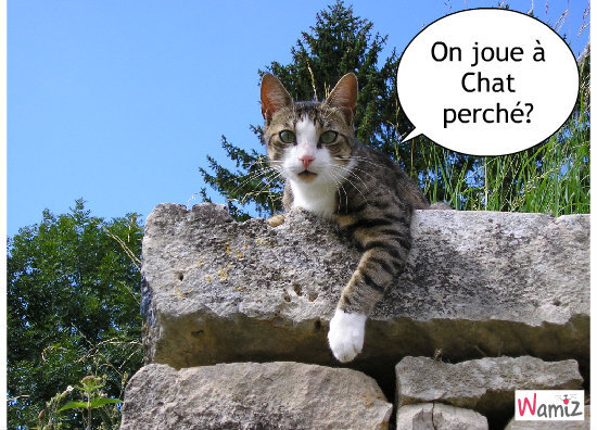Chat perché, lolcats réalisé sur Wamiz