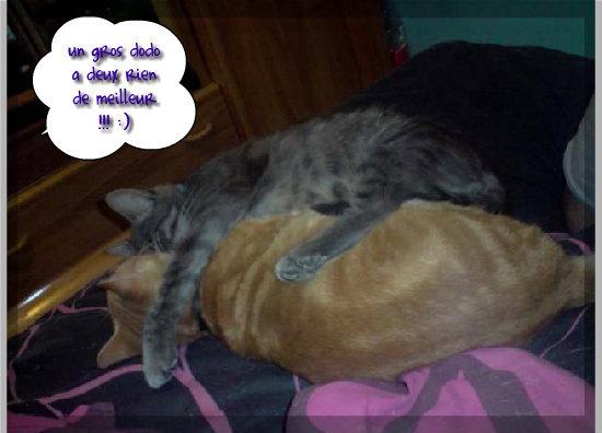 un amour de chat, lolcats réalisé sur Wamiz