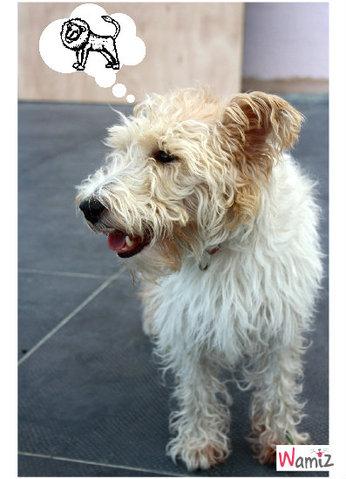 Psychologie canine !, lolcats réalisé sur Wamiz