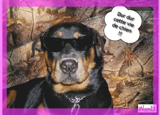Cool chien Cool, lolcats réalisé sur Wamiz