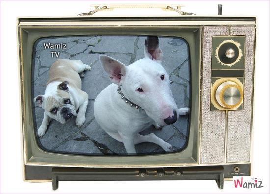 Wamiz TV, lolcats réalisé sur Wamiz