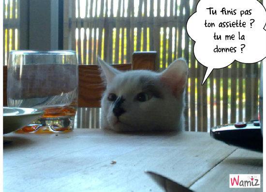 Le chat gourmand, lolcats réalisé sur Wamiz