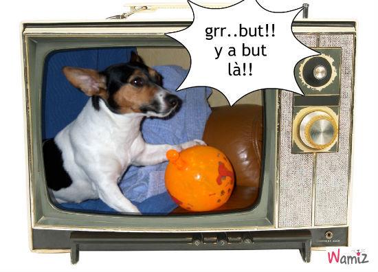 allez les dogs!!!, lolcats réalisé sur Wamiz