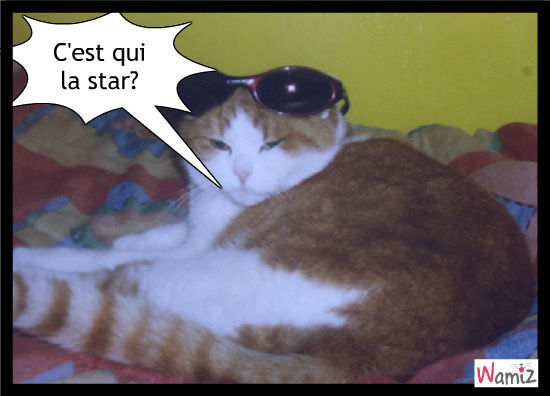lunettes de star, lolcats réalisé sur Wamiz