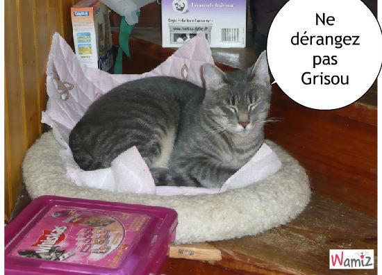 la sieste de grisou, lolcats réalisé sur Wamiz