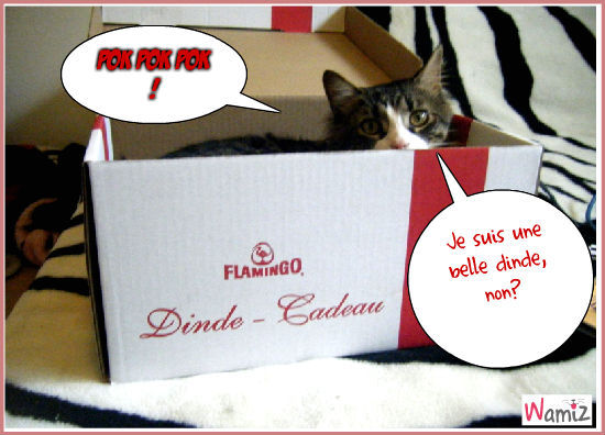 Le chat-dinde !, lolcats réalisé sur Wamiz