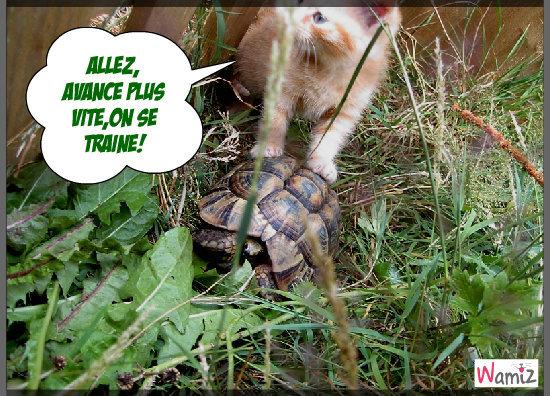 le chat et la tortue, lolcats réalisé sur Wamiz