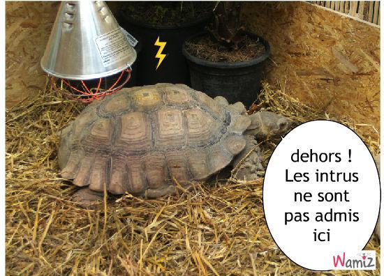 tortue d'eau douce, tortue furieuse, lolcats réalisé sur Wamiz