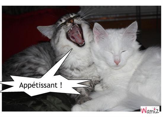 Chat-vampire, lolcats réalisé sur Wamiz