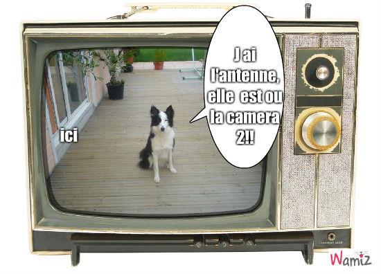 Bianca fait de la télé!!!, lolcats réalisé sur Wamiz