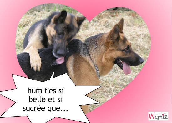 couple de chien, lolcats réalisé sur Wamiz