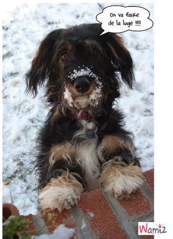 Vive la neige , lolcats réalisé sur Wamiz