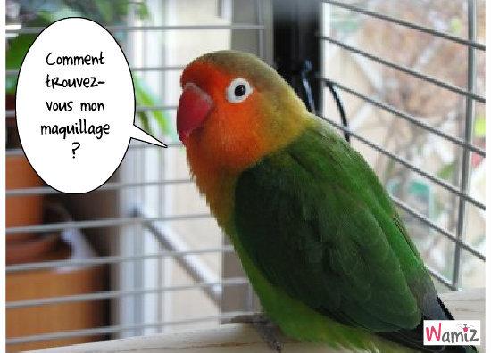 Un oiseau bien maquillé !, lolcats réalisé sur Wamiz