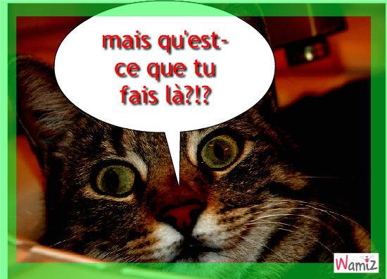 Surprise!P.S:ce n'est pas mon chat sur la photo,mais il lui ressemble., lolcats réalisé sur Wamiz