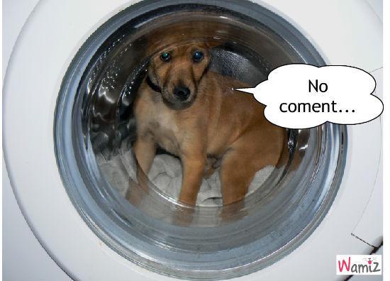 Ximist dans la machine à laver, lolcats réalisé sur Wamiz