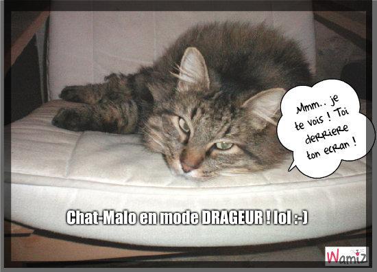 Chat-Malo le dragueur !, lolcats réalisé sur Wamiz